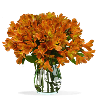 Bouquet d'Alstroemeria