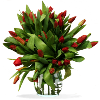Bouquet Tulipes Rouges