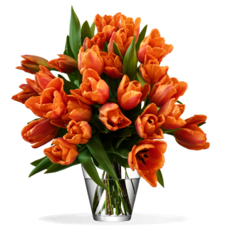 Bouquet Tulipes Orange