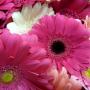 Bouquet l'Improbable rose