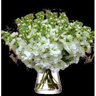 Bouquet Giroflées