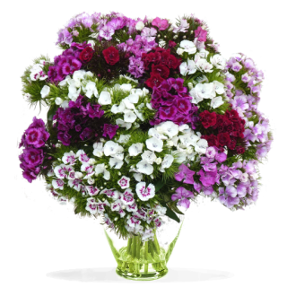 Bouquet po te lilas rose for Bouquet de fleurs 24h
