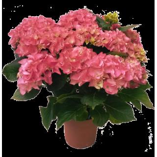 Bouquet de fleurs de france livraison domicile en 24h for Livraison bouquet de fleurs a domicile
