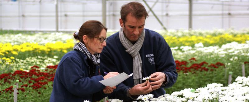 Producteur de fleurs coup es et fleuriste en ligne lilas for Composer bouquet en ligne