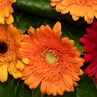 Bouquet Ecologique orange