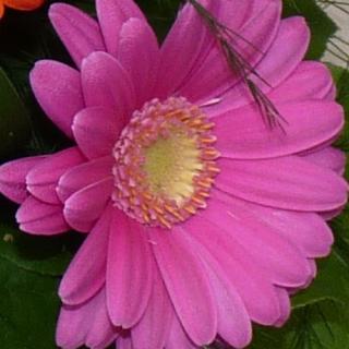Bouquet Pastille