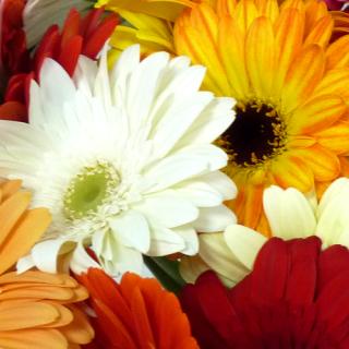 Bouquet l'Improbable multicolor