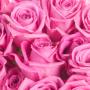 Botte roses roses