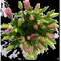 Bouquet Lys asiatique rose