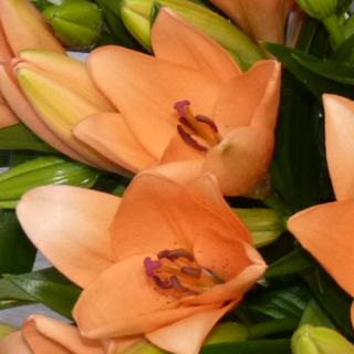Bouquet Lys saumoné